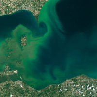 Harmful Algal Blooms and You!  Click on the image for more information.  Image Courtesy of NASA/ Landsat-8.